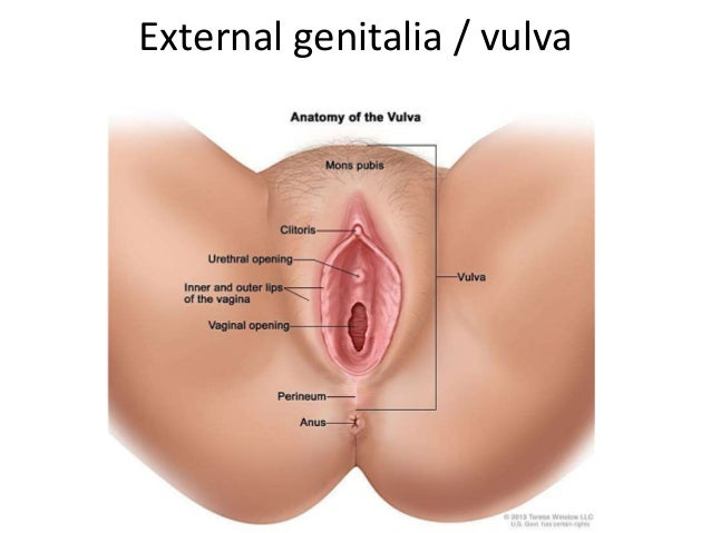 Show Images Of Penis