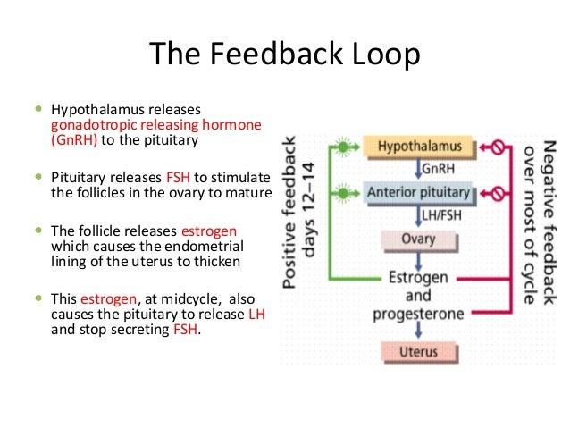 Gnrh Feedback Loop