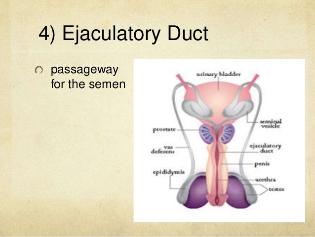 Anatomy and Physiology of the Male and Female Reproductive System
