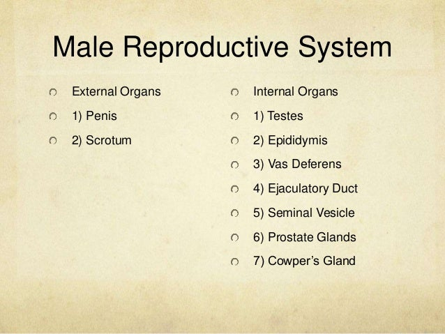 Anatomy and physiology of the male and female reproductive system male reproductive organs 3 male reproductive system external ccuart Images