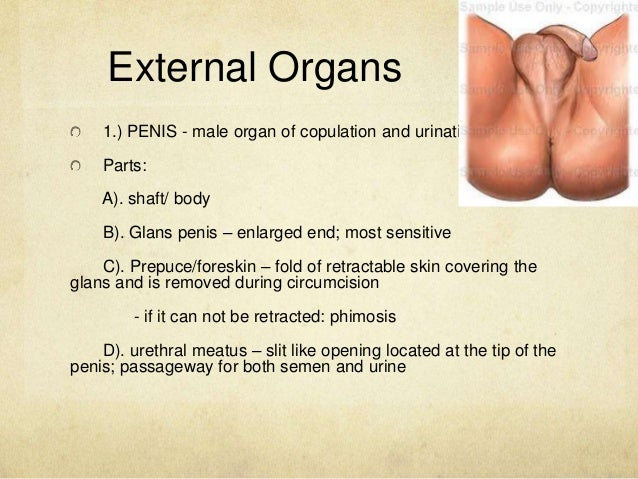 Women with both organs