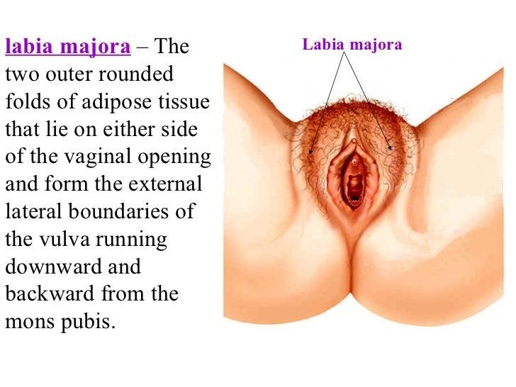 Average female vagina