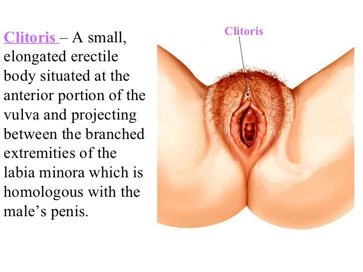 female reproductive system, Human body