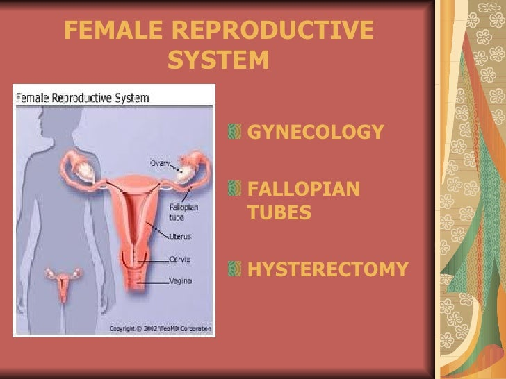 FEMALE REPRODUCTIVE       SYSTEM           GYNECOLOGY           FALLOPIAN           TUBES           HYSTERECTOMY