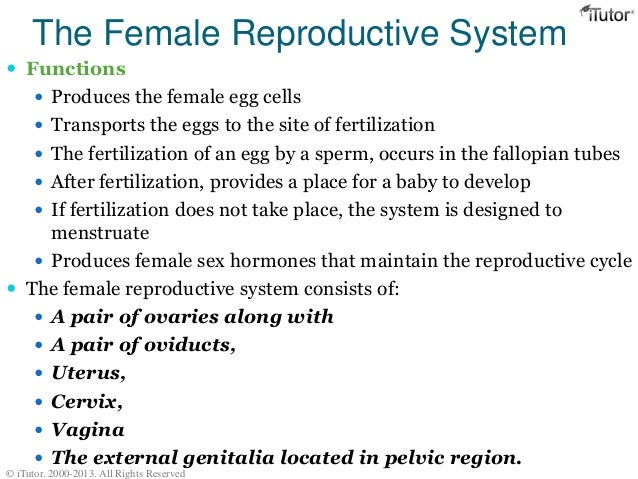 Female reproductive system ccuart Images