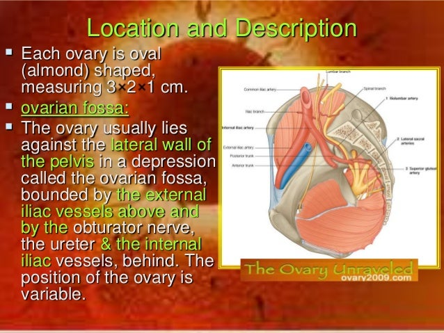 Pineal Gland Calcification furthermore Living Organisms Whms additionally Stock Illustration Endocrine System Set Icons Vector Human Anatomy Image49248981 likewise Female Reproductive System 26884844 together with Endocrine System Glands Diagram. on endocrine glands and function diagram