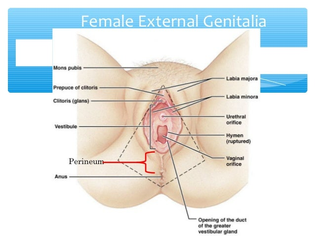 Female reproductive systemSlideShare