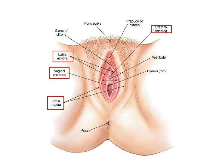 Are girls supposed to shave their vagina