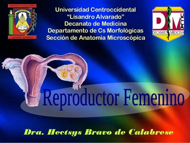 Aparato Reproductor Femenino Anatomía Microscópica II (Histología)