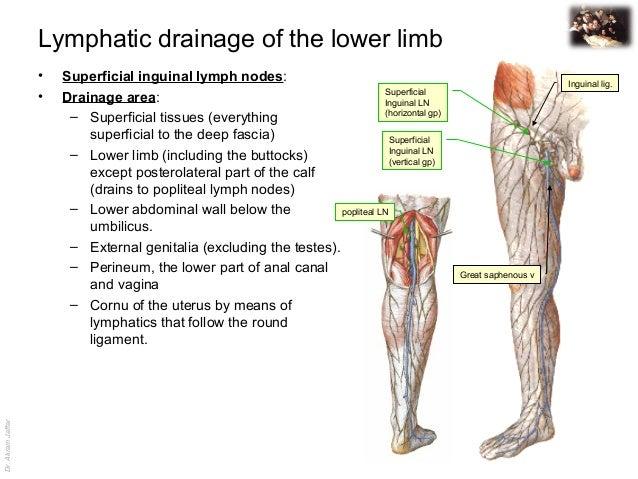 femoral lymphadenopathy - photo #25