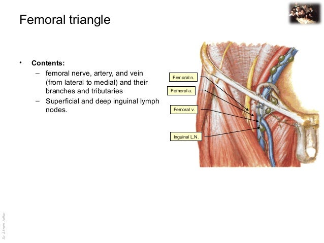 femoral lymphadenopathy - photo #23
