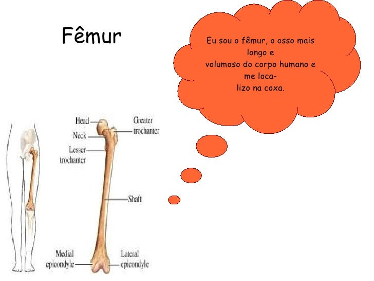 Fêmur  Eu sou o fêmur, o osso mais longo e volumoso do corpo humano e me loca- lizo na coxa.