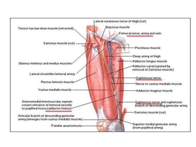 Femur Shaft Fractures