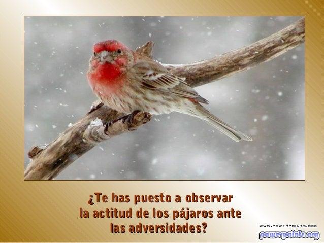 ¿Te has puesto a observarla actitud de los pájaros ante      las adversidades?