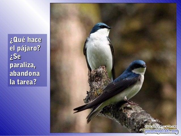 ¿Qué haceel pájaro?¿Separaliza,abandonala tarea?