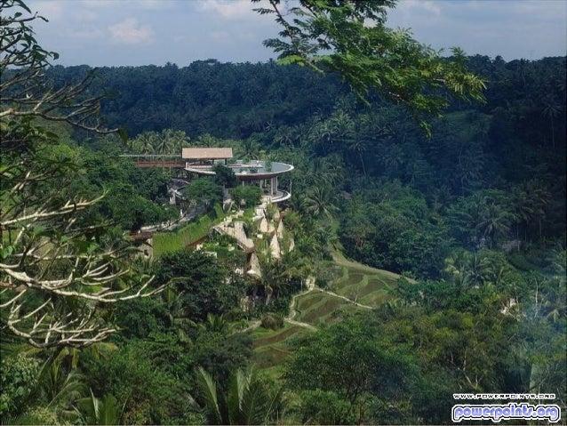 Fenelon turismo en la_jungla-8414-8414 Slide 2
