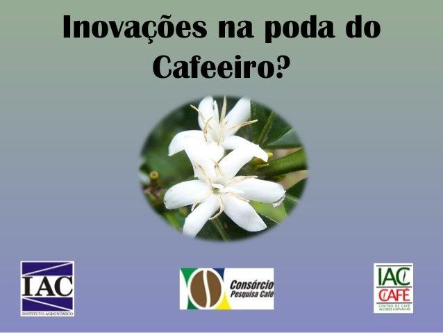 Inovações na poda do Cafeeiro?