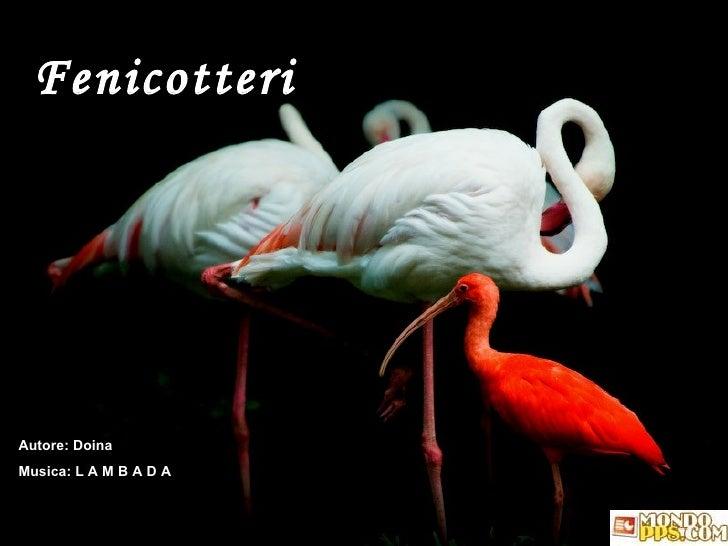 Fenicotteri Autore: Doina Musica: L A M B A D A