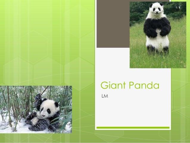 Giant PandaLM