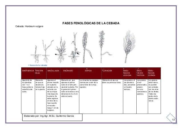 FENOLOGIA DEL TRIGO EBOOK