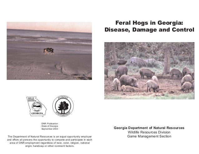 Feral Hogs in Georgia: Disease, Damage and Control Georgia Department of Natural Resources Wildlife Resources Division Gam...