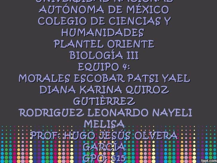 UNIVERSIDAD NACIONAL AUTÓNOMA DE MÉXICO COLEGIO DE CIENCIAS Y HUMANIDADES  PLANTEL ORIENTE BIOLOGÍA III EQUIPO 4: MORALES ...