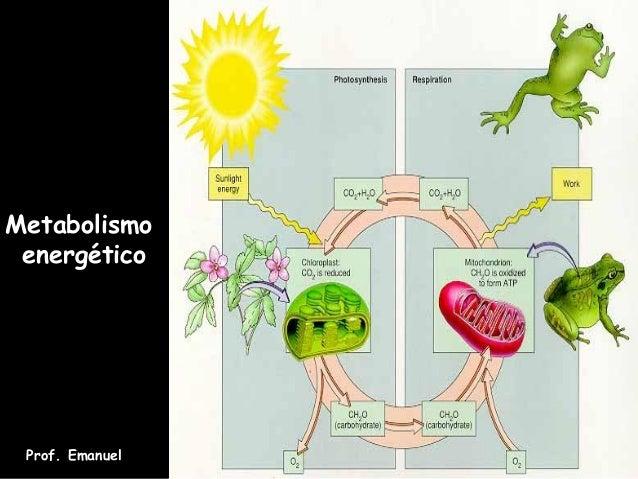 Metabolismo energético Prof. Emanuel