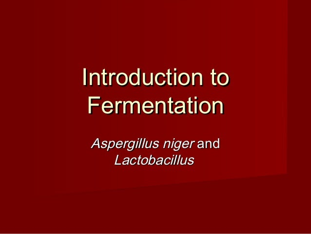 Introduction toIntroduction to FermentationFermentation Aspergillus nigerAspergillus niger andand LactobacillusLactobacill...