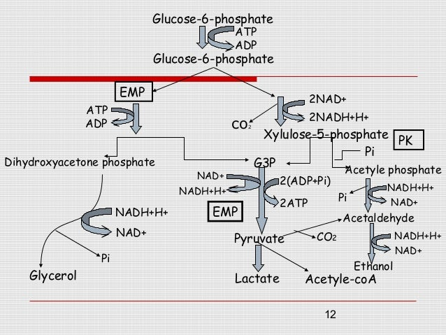 fermentation of carbohydrates During fermentation, sugar (glucose) from plant material is converted into ethanol  and carbon dioxide this typically takes place at temperatures of around 30°c.