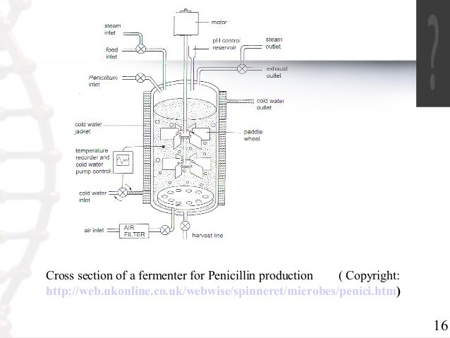production of penicillin through fermentation Microbial production of antibiotics by fermentation & synthesis production of antibiotics is very critical to meet the market demands of health care system antibiotics are secretions from certain strain of bacteria to restrict growth of other bacteria around them.