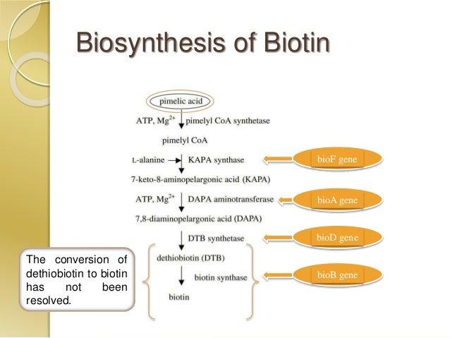 Microbial fermentation of amino acids