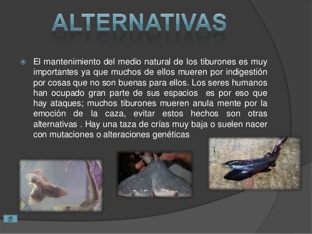  El mantenimiento del medio natural de los tiburones es muy importantes ya que muchos de ellos mueren por indigestión por...