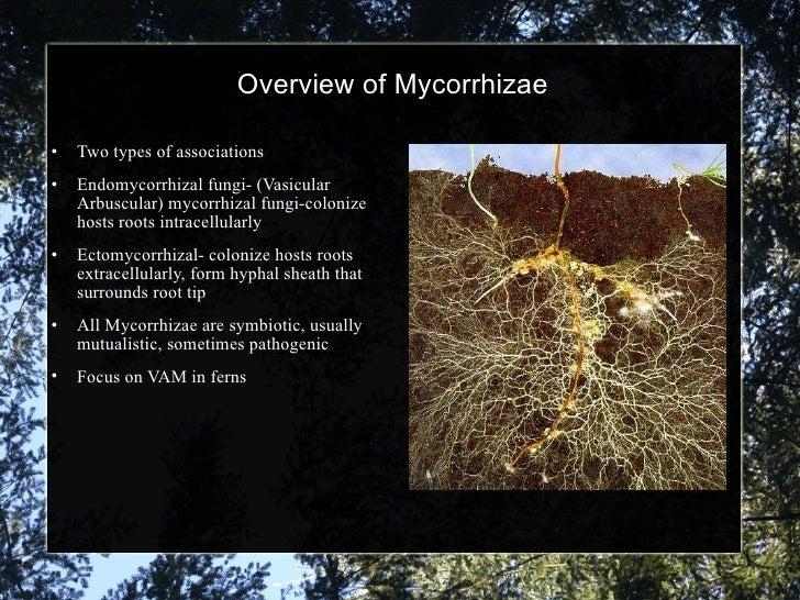 endomycorrhizal slide - photo #28