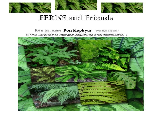 FERNS and Friends      Botanical name Pteridophyta                   over 12,000 speciesby Annie Cloutier Science Departme...