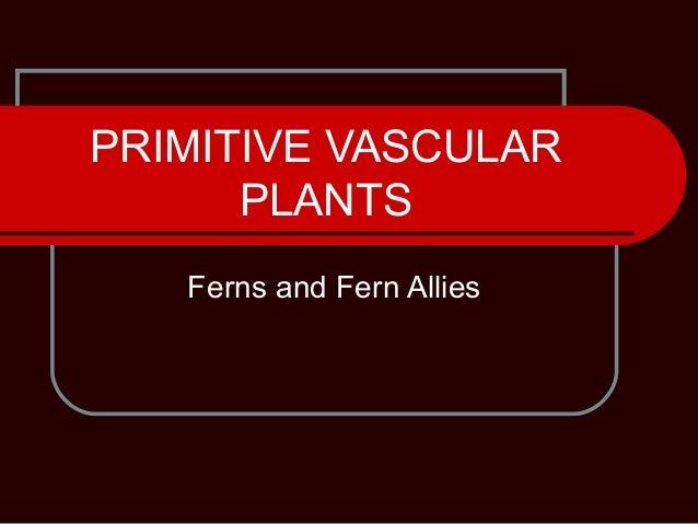 PRIMITIVE VASCULAR PLANTS Ferns and Fern Allies