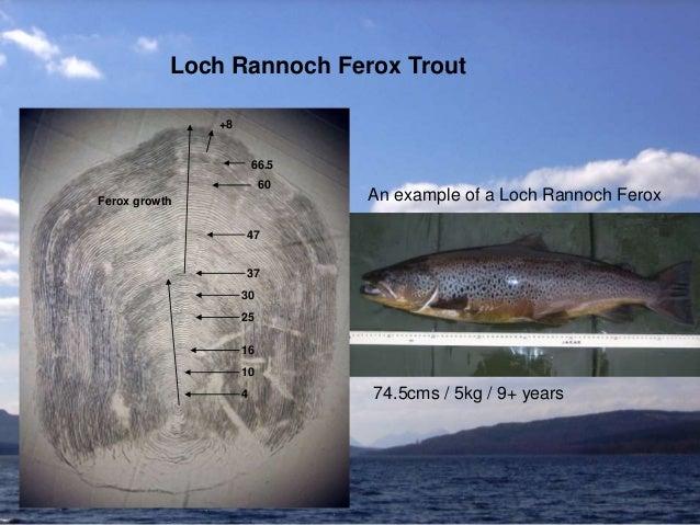 Loch Rannoch Ferox Trout An example of a Loch Rannoch Ferox 74.5cms / 5kg / 9+ years 37 47 60 66.5 +8 Ferox growth 4 10 16...