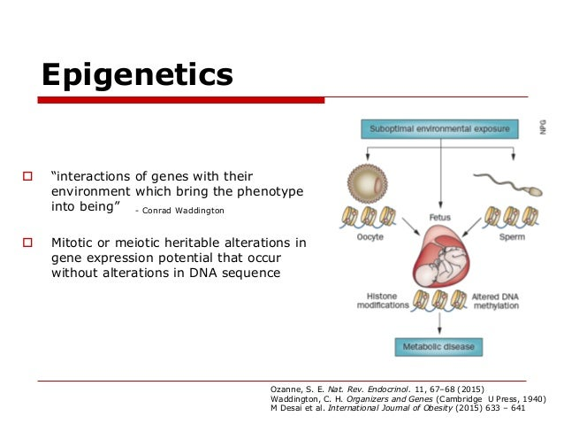 role of genetics on development What role do genetics play in their development twin studies • allow the relationship of genetics and environment to be studied separately.