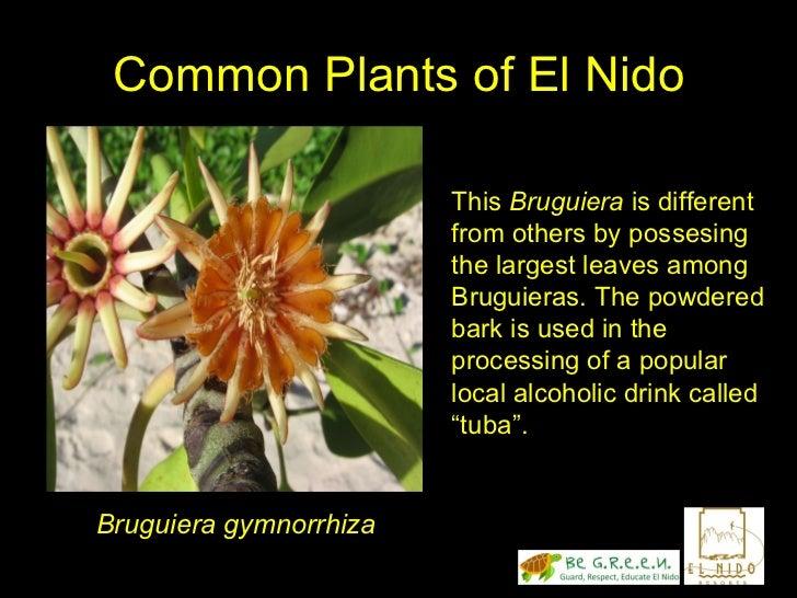 The plants of el nido palawan by ulysses ferreras for Plante ulysse