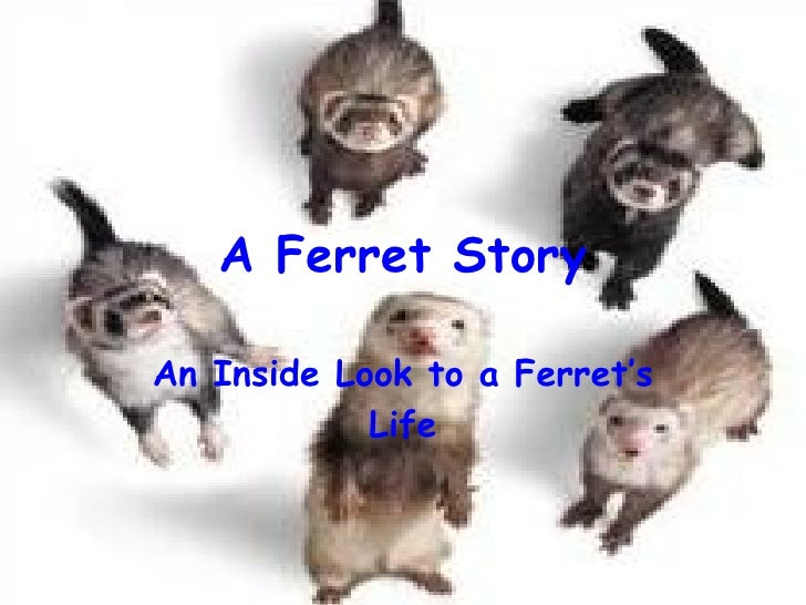 A Ferret Story An Inside Look to a Ferret's Life