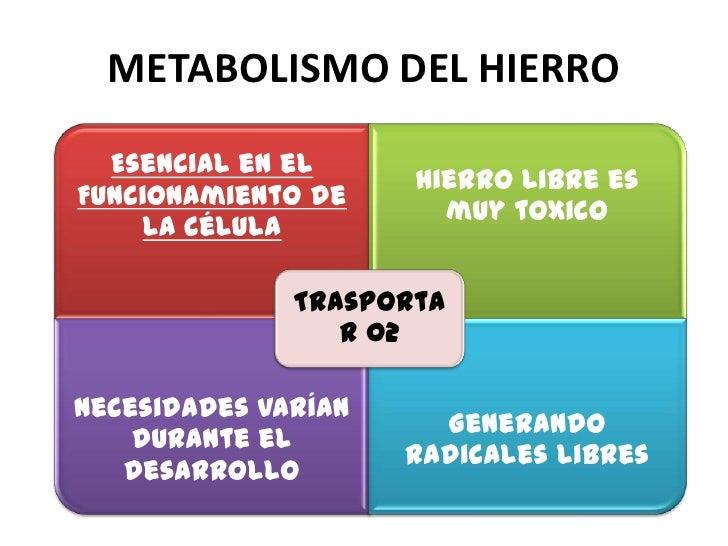 METABOLISMO DEL HIERRO  Esencial en el                     Hierro libre esFuncionamiento de                       muy toxi...