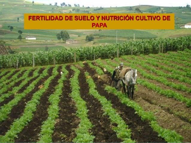 FERTILIDAD DE SUELOSFERTILIDAD DE SUELO Y NUTRICIÓN CULTIVO DE PAPA