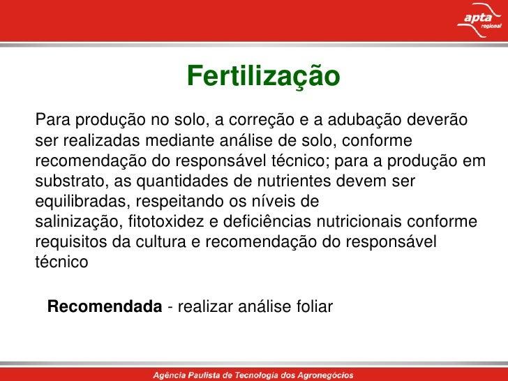 Fertilização do morangueiro Slide 2