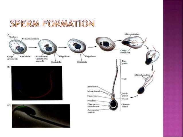 binding protein dna Sperm