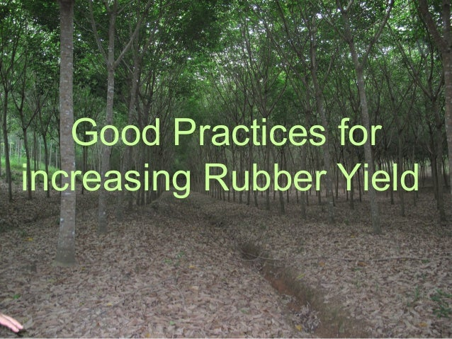 Good Practices for increasing Rubber Yield