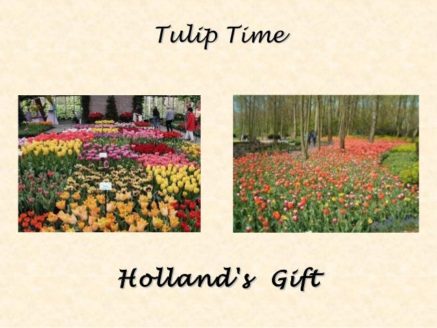 Tulip TimeTulip Time Holland's GiftHolland's Gift