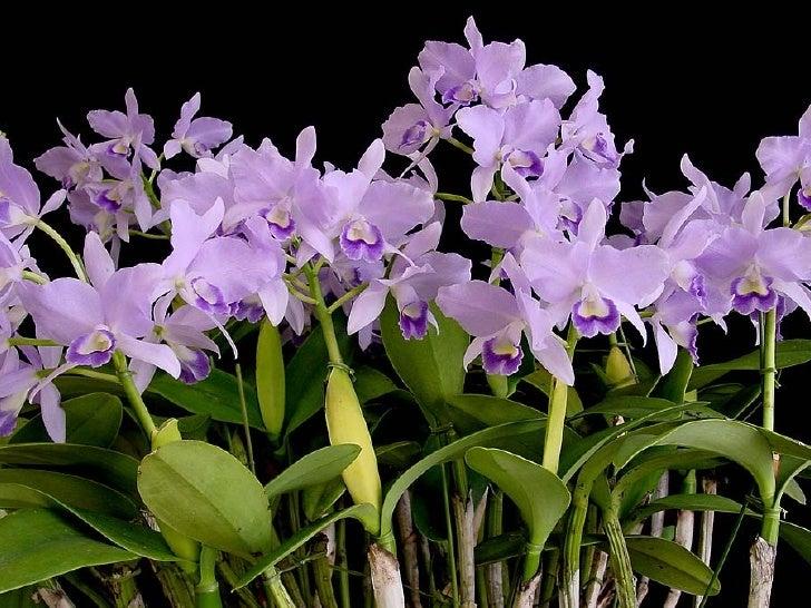 Orchids Festival Slide 3