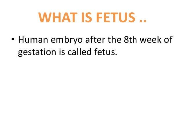 Fetal autopsy Slide 2