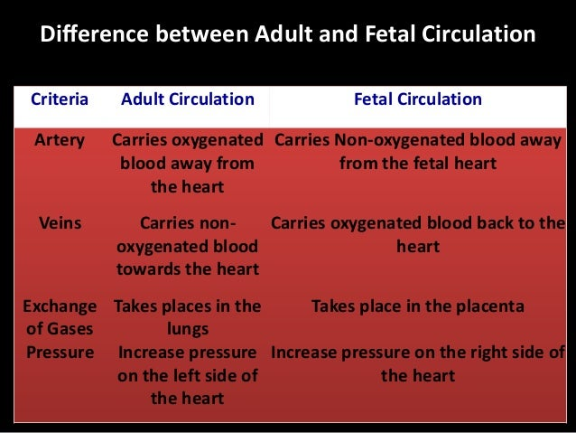 Fetal Circulation Sequence Exchange of gases occurs in the placenta. Oxygenated blood is carried by the umbilical vein tow...