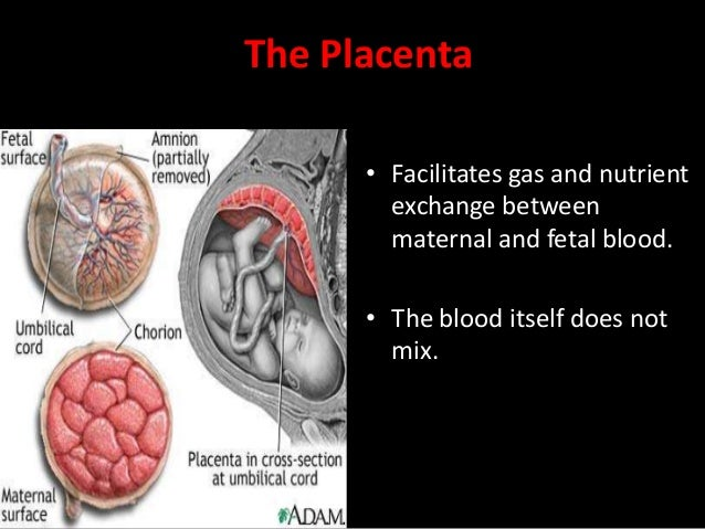 Placental role The core concept behind fetal circulation is that fetal hemoglobin has a higher affinity for oxygen than do...