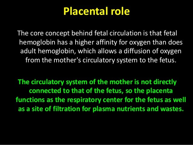 Image depicts fetal circulation. Note the areas of oxygenated blood (red) and deoxygenated blood (blue) mixing (purple) th...